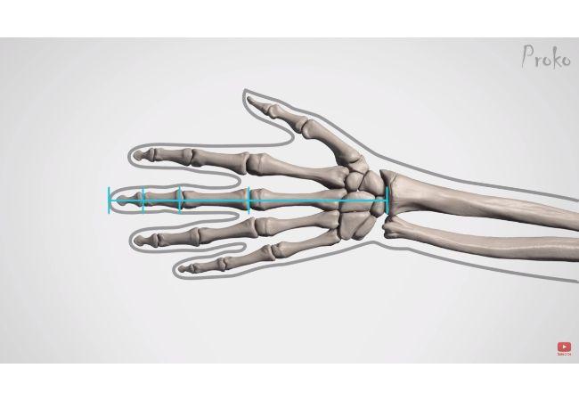 手の中心線